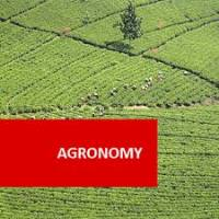 Diploma in sugar agronomy
